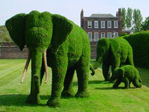 #23 - Topiary